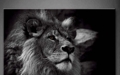 Photographie d'un lion en noir et blanc