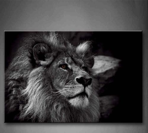 photographie d 39 un lion en noir et blanc d co animaux. Black Bedroom Furniture Sets. Home Design Ideas